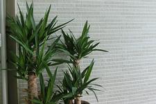 Japanese ceramic tile Photo:BELDAD BORDER